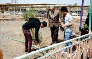 من جديد … كلية الآثار تنفذ حملة تشجير وتأهيل للمساحات الخضراء فيها