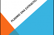 Plasmid DNA Extraction