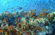 دورة تدريبية يقيمها قسم علوم الحياة في كلية العلوم حول تأثير المبيدات على احياء البيئة المائية