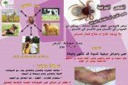كلية الطب البيطري في جامعة القادسية تقوم بحملة تطوعية تثقيفية حول مرض الحمى النزفية