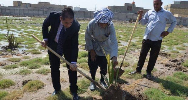 جامعة القادسية تنظم حملة لاستزراع اشجار النخيل في اروقة الجامعة