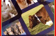 أطلس أمراض الحيوان- الأمراض الطفيلية.