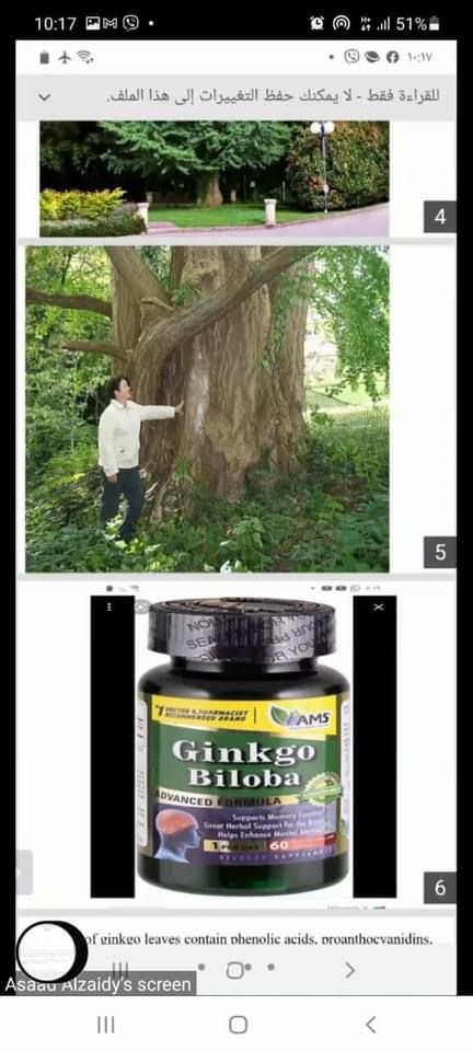 كلية الصيدلة بجامعة القادسية تنظم حلقة نقاشية عن التأثيرات الطبية لنبات الجنكة( شجرة المعبد)